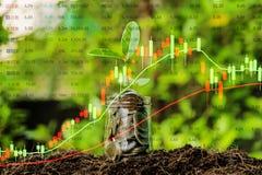 Η οικονομική έννοια επένδυσης, γραφικές παραστάσεις αποθεμάτων αυξάνεται ένα πλήρες νόμισμα, το δέντρο αυξάνεται στοκ εικόνες