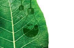 Η οικολογία και σκέφτεται το πράσινο σχέδιο έννοιας Στοκ εικόνες με δικαίωμα ελεύθερης χρήσης