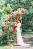 Η ολόκληρη άποψη της νύφης που στέκεται inder την αψίδα που καλύπτεται με τα κόκκινα τριαντάφυλλα Μυρίζει και σχετικά με τα λουλο Στοκ Φωτογραφίες