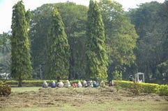 Η ομάδα γυναικών φυτεύει τα λουλούδια στον κήπο όπου τα μεγάλα δέντρα αυξάνονται στοκ φωτογραφίες με δικαίωμα ελεύθερης χρήσης