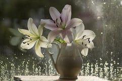 Η ομάδα ελαφριών άσπρων και ρόδινων κρίνων στο βάζο, όμορφο άνθισμα ανθίζει στο εσωτερικό στο παράθυρο στοκ εικόνες με δικαίωμα ελεύθερης χρήσης