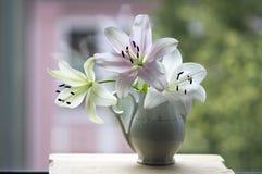 Η ομάδα ελαφριών άσπρων και ρόδινων κρίνων στο βάζο, όμορφο άνθισμα ανθίζει στο εσωτερικό στο παράθυρο στοκ φωτογραφία