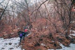 Η ομάδα τουριστών με τα μεγάλα σακίδια πλάτης είναι στο βουνό στοκ φωτογραφία