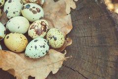 Η ομάδα αυγών ορτυκιών και βαλανιδιάς βγάζει φύλλα στην ξύλινη επιφάνεια Στοκ Εικόνες