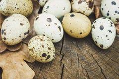 Η ομάδα αυγών ορτυκιών και βαλανιδιάς βγάζει φύλλα στην ξύλινη επιφάνεια Στοκ Φωτογραφίες