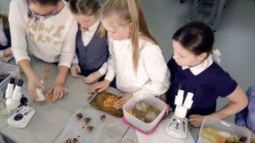 Η ομάδα παιδιών σχολείου που προετοιμάζονται για το πείραμα στο εργαστήριο 4K απόθεμα βίντεο