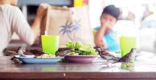 Η ομάδα σπουργιτιών επιτίθεται στα τρόφιμα υπολοίπου στα πιάτα στον πίνακα στην αγορά τροφίμων οδών Στοκ Εικόνες
