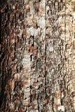 Η δομή παλαιού αποσυντέθηκε ξύλο Στοκ φωτογραφία με δικαίωμα ελεύθερης χρήσης