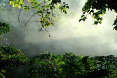 Η ομίχλη στα ξημερώματα στοκ εικόνες
