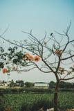 Η ομορφιά δέντρων! Στοκ Φωτογραφίες