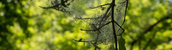 Η ομορφιά της ουκρανικής φύσης στοκ φωτογραφίες με δικαίωμα ελεύθερης χρήσης