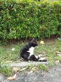 η ομορφιά της φύσης στο μεγάλο πάρκο (  δείτε ένα cat)  στοκ εικόνα με δικαίωμα ελεύθερης χρήσης