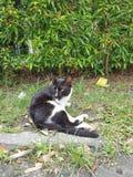 η ομορφιά της φύσης στο μεγάλο πάρκο (  δείτε ένα cat)  στοκ εικόνες