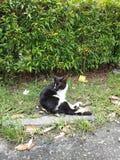 η ομορφιά της φύσης στο μεγάλο πάρκο (  δείτε ένα cat)  στοκ φωτογραφία