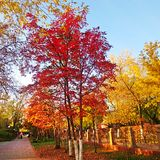Η ομορφιά της φύσης την ημέρα φθινοπώρου Στοκ εικόνες με δικαίωμα ελεύθερης χρήσης