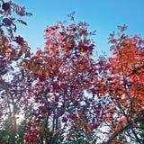 Η ομορφιά της φύσης την ημέρα φθινοπώρου Στοκ Εικόνα