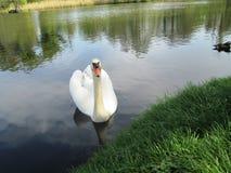 Η ομορφιά της φύσης Στοκ φωτογραφίες με δικαίωμα ελεύθερης χρήσης