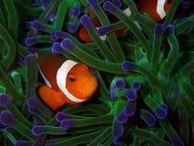 Η ομορφιά του υποβρύχιου κόσμου στοκ φωτογραφία με δικαίωμα ελεύθερης χρήσης