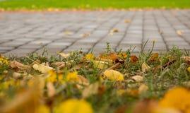 Η ομορφιά του φθινοπώρου Στοκ Εικόνες