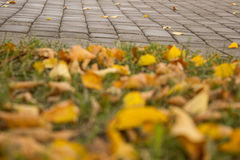 Η ομορφιά του φθινοπώρου στοκ φωτογραφία με δικαίωμα ελεύθερης χρήσης