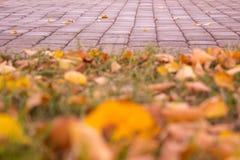 Η ομορφιά του φθινοπώρου Στοκ φωτογραφίες με δικαίωμα ελεύθερης χρήσης
