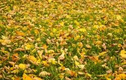 Η ομορφιά του φθινοπώρου στοκ εικόνα
