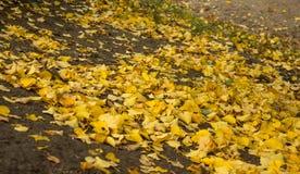 Η ομορφιά του φθινοπώρου στοκ εικόνα με δικαίωμα ελεύθερης χρήσης