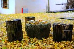 Η ομορφιά φθινοπώρου Ginkgo Biloba στην πόλη Nanxing Στοκ φωτογραφία με δικαίωμα ελεύθερης χρήσης