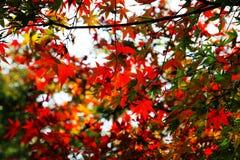 Η ομορφιά φθινοπώρου Xihu, δυτική λίμνη Στοκ εικόνα με δικαίωμα ελεύθερης χρήσης