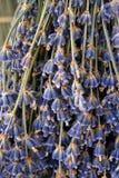 Η ομορφιά lavender των λουλουδιών Στοκ εικόνα με δικαίωμα ελεύθερης χρήσης