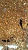 Η οξυδωμένη επιφάνεια στο χάλυβα κάνει την πτώση χρώματος μακριά Στοκ εικόνες με δικαίωμα ελεύθερης χρήσης