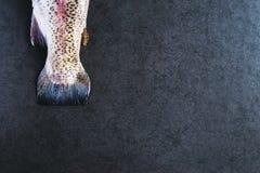 Η ουρά της πέστροφας Στοκ εικόνες με δικαίωμα ελεύθερης χρήσης