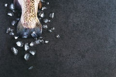 Η ουρά της πέστροφας Στοκ φωτογραφία με δικαίωμα ελεύθερης χρήσης