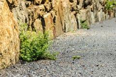 Η οδική χλόη λικνίζει την πορεία πετρών Στοκ εικόνα με δικαίωμα ελεύθερης χρήσης