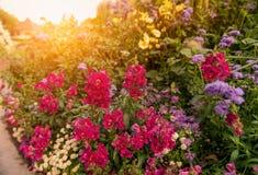 Η οδός στο ηλιοβασίλεμα, διακόσμησε ένα κρεβάτι λουλουδιών με ποικίλα χρώματα Στοκ Εικόνες