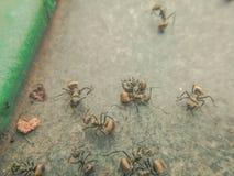 Η πάλη μυρμηγκιών Στοκ εικόνα με δικαίωμα ελεύθερης χρήσης