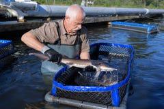 Η πέστροφα εκμετάλλευσης ψαράδων ποτίζει έξω στο fishfarm Στοκ Εικόνες