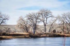 Η παγωμένη λίμνη αλιείας πλαισιώνεται από τα γυμνά δέντρα αυτόν τον χειμώνα φυσικό Στοκ φωτογραφίες με δικαίωμα ελεύθερης χρήσης