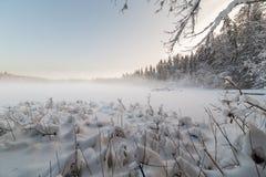 Η παγωμένη χειμερινή λίμνη στο δάσος κάτω από το χιόνι Στοκ εικόνες με δικαίωμα ελεύθερης χρήσης