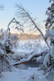 Η παγωμένη χειμερινή λίμνη στο δάσος κάτω από το χιόνι Στοκ φωτογραφία με δικαίωμα ελεύθερης χρήσης