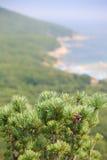 η παραλία ανασκόπησης δια& Στοκ φωτογραφία με δικαίωμα ελεύθερης χρήσης