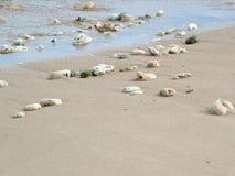 η παραλία λικνίζει τα κοχύλια Στοκ Εικόνα