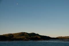 Η παραπαίουσα ομορφιά Prion του νησιού Στοκ Εικόνες