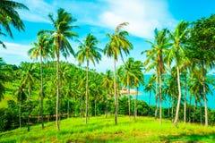 η παραλία καλύπτει την ακτή ψηφιακά πράσινη κρεμά εικόνας νησιών τα μεγάλα φωτισμού μαγικά χειρισμένα σημειώσεων δέντρα ουρανού θ Στοκ φωτογραφία με δικαίωμα ελεύθερης χρήσης