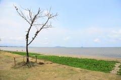 Η παραλία με ένα δέντρο και η χλόη με το μπλε ουρανό Στοκ φωτογραφία με δικαίωμα ελεύθερης χρήσης