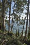 Η παραλία του Orion από Sonabia Στοκ Εικόνα