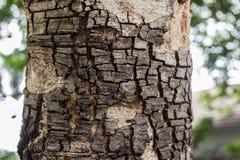 η παλαιά απαρίθμηση ξύλου και σύστασης Στοκ φωτογραφία με δικαίωμα ελεύθερης χρήσης