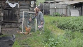 Η παλαιά γιαγιά περπατά ένα ετερόκλητο κοτόπουλο με τα μικρά κοτόπουλα απόθεμα βίντεο