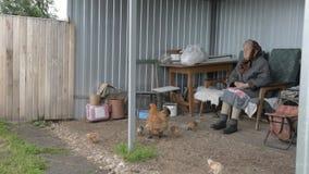 Η παλαιά γιαγιά φροντίζει το κοτόπουλο και τα κοτόπουλα απόθεμα βίντεο