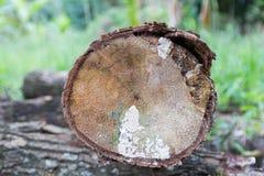 Η παλαιά ξυλεία Στοκ Εικόνες